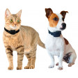 Set collier anti-fugue Canifugue Small - Chiens et chats